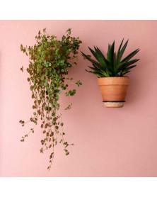 Plantwire | Small | Ø 10 cm...