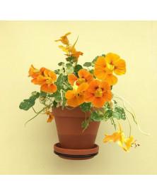 Plantwire | Large | Ø 14 cm...