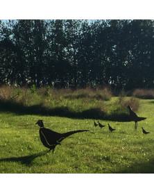 Fasanhøne med 4 kyllinger |...